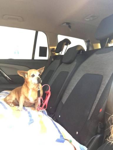 La adopción de la perrita Xula que terminó con final feliz