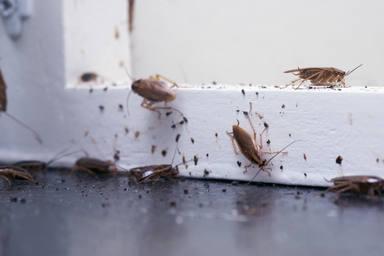 Fulmigar hormigas y cucuarachas