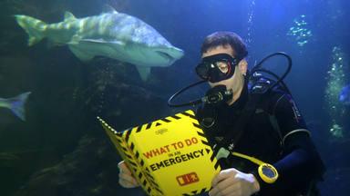 """¿Recuerdas """"El Tiburón""""?"""