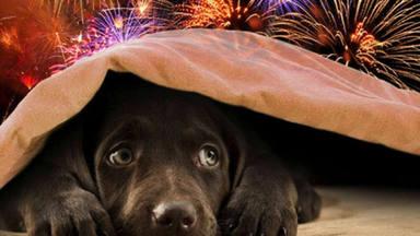 Se cumple un año desde que falleció Magui, la perra bóxer que murió abrazada a su dueño
