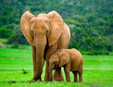 Música para elefantes