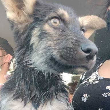 La bonita historia que hay detrás de Sopita, la perrita que ha adoptado Aitana