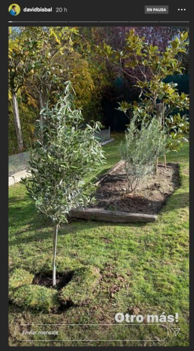 Bisbal anuncia que ha plantado un árbol por Bianca