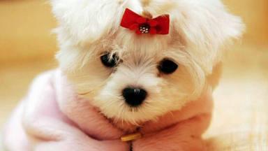 La enorme desilusión de esta joven al recibir el perro robado a sus vecinos como regalo de 'San Valentín'