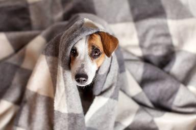 Claves para que tu perro duerma bien por la noche