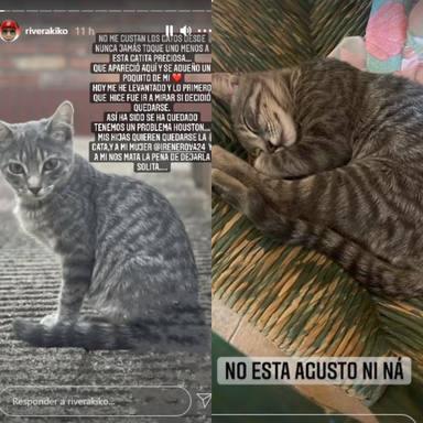 ctv-fgb-kiko-rivera-gato