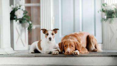 Razones para vivir tu vida junto a una mascota