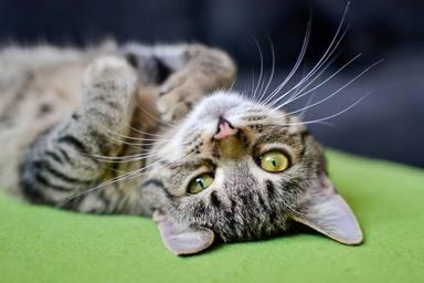 ¿No entiendes a tu gato? Te damos las 5 claves del idioma de este felino
