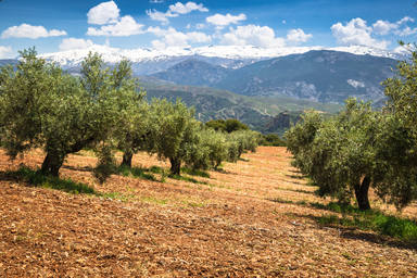 Beautiful,Valley,With,Old,Olive,Trees,In,Granada,,Spain