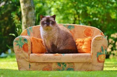 Passem massa temps asseguts al sofà
