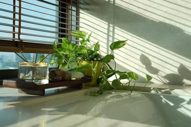 Les millors plantes per al bany