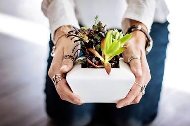 Com recuperar les plantes que has deixat a casa mentre gaudies de les teves vacances