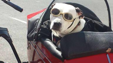 ¡Buenas noticias! La EMT aprueba que los perros puedan subir a los autobuses