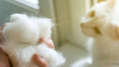 Mateo y Andrea te cuentan cómo hacer que los pelos de tu mascota dejen de ser un estorbo