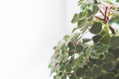 Com cuidar les plantes d'interior a la tardor