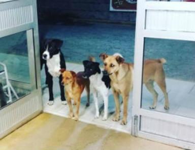¿Quieres saber a quién esperan estos perros en esa puerta?
