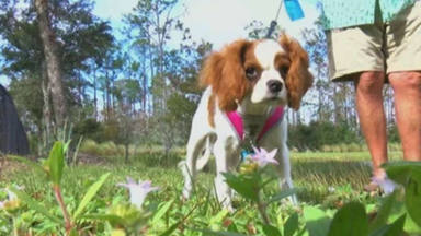 El increíble video viral de un hombre que rescata a su cachorro
