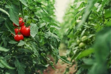 """Demostrat: Les plantes """"criden"""""""