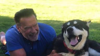 Arnold Schwarzenegger dice que se siente 'de maravilla' tras de someterse a una cirugía cardíaca