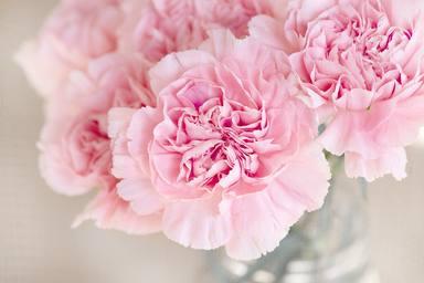 Aixequen l'ànim i redueixen l'estrès: l'inesperat 'boom' de les flors al confinament