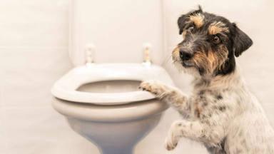 El secreto mejor guardado para que tu perro deje de perseguirte a todos los lados