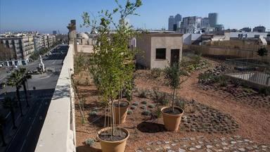 Barcelona busca edificis que vulguin transformar els terrats en jardins