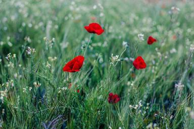 Com combatre l'astènia primaveral de forma natural