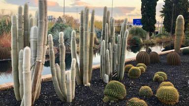 Amantes de los cactus