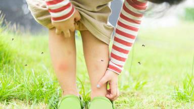 El remedio casero para acabar con las picaduras de los mosquitos en verano