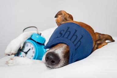 Trucos para que tu perro duerma mejor por las noches