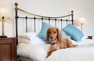 Estos hoteles sí admiten a tu mascota, ¡Apunta!