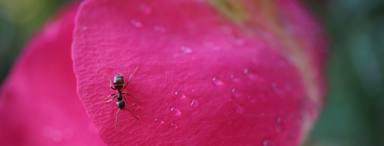 Remeis naturals per acabar amb les formigues a casa