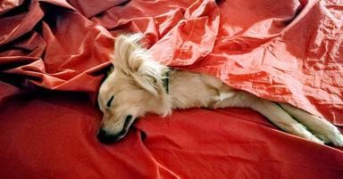 Perro durmiendo la siesta