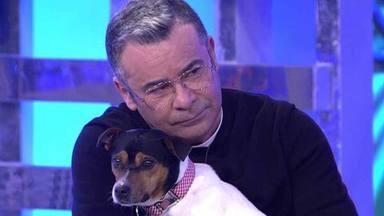 """Jorge Javier Vázquez revela qué nombre de famoso le ha puesto a su nuevo perro: """"No me gustaba nada"""""""