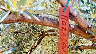 Por qué Rozalén tiene un olivo con su nombre y lleva tatuada una ramita en uno de sus tobillos