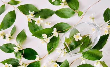Plantes que t'ajuden a calmar la teva ansietat a casa
