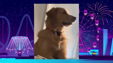 El perro que se convierte en viral al despertar a su dueña