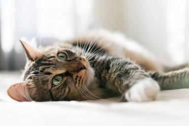 Tu gato te ignora y solo te hará caso de una manera, ¡demostrado científicamente!