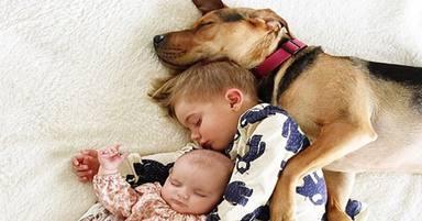 Els nens que conviuen amb gossos són menys propensos a desenvolupar esquizofrenia