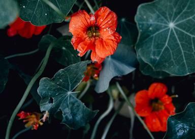 Formes de protegir el teu jardí de la pluja