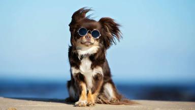 Como calcular la edad de un perro