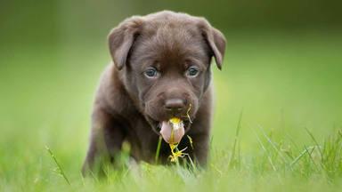 Las razones de la obesión de los perros por la hierba