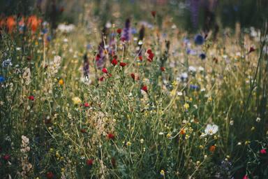 Plantes silvestres per a afegir als teus plats