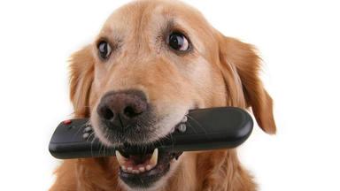 ¿Qué sienten y ven los perros cuando miran la televisión?