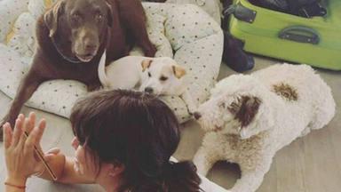 El suculento menú que ofrece Vanesa Martín a sus perros