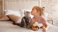 Siete vidas y siete beneficios de tener un gato