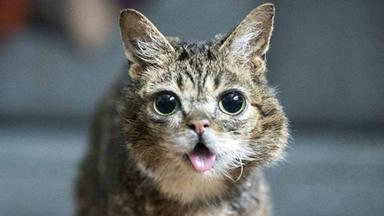 Los gatos se suman a la lista de 'influencers' de Instagram