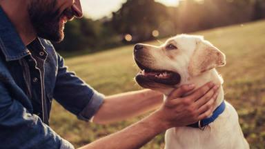 Un estudio demuestra que los perros entienden realmente lo que les decimos