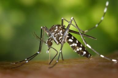 Comença la nova campanya contra el mosquit tigre a Barcelona