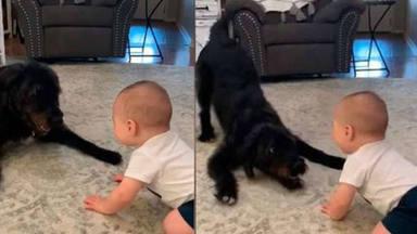 El perrito y bebé viral